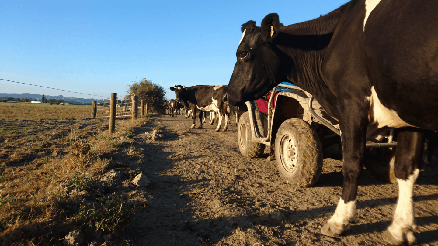 In the case of a revised forecast milk payout - what's the plan?
